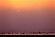 Single person and seabirds on the beach during foggy sunset, near Cannon Beach, Oregon