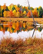 Autumn foliage along beaver pond south of the Huron Mountains between Big Bay and Skanee,  Upper Peninsula of Michigan.