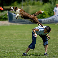 Flydogs frisbee world championship qualifier competition.