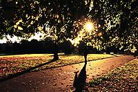 A pedestrian walks through the park as beautiful morning sunshine lights up autumn colours in Glasgow Green