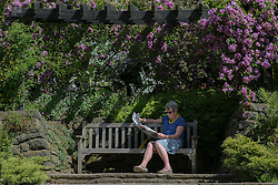 © Licensed to London News Pictures. 18/07/2016. Batley, UK. A woman reads a paper in the high temperatures and sunny weather at Golden Achre park in Leeds West Yorkshire.The UK is set to experience a mini heatwave over the next week with temperatures hitting the highest of the year so far.  Photo credit : Ian Hinchliffe/LNP