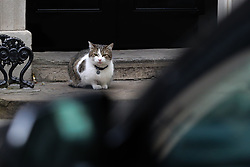 April 26, 2017 - London, London, United Kingdom - Image ©Licensed to i-Images Picture Agency. 26/04/2017. London, United Kingdom. Larry - The Downing Street Cat. Larry - The Downing Street Cat in Downing Street. Picture by Dinendra Haria / i-Images (Credit Image: © Dinendra Haria/i-Images via ZUMA Press)