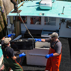 """The crew loads bait onto """"Jackpot"""" at the Spruce Head Fisherman's Co-op in South Thomaston, Maine."""