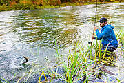 David Page brings in a leaping brown trout. Vancouver Island, BC