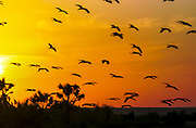 Africa, Kenya, lake Turkana silhouette of birds at sunset in October