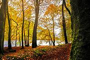 Trees in autumn splendour in the Trossachs in Scotland