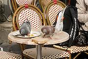 In Utrecht eten twee duiven op een terras van een boterham die daar is blijven liggen.<br /> <br /> In Utrecht pigeons eating a sandwich left on the terrace.