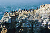 Pelican Conference, Pacific Coast, California