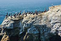 Pelican Conference, Pacific Coast, California