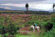 Horseback riding in Cotopaxi National Park, Ecuador.