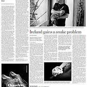 """Tearsheet of """"Boom Over, St. Patrick's Isle Is Slithering Again"""" published in The International Herald Tribune (Page Two)"""