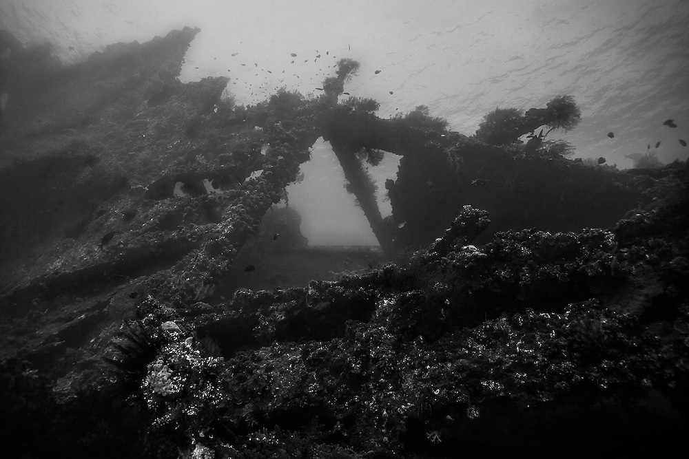INDONESIA. Tulamben, Bali. July 11th, 2013. The 120-meter long wreck has become a new home for an extraordinary number of fish, coral and invertebrates. Resident Bump-head parrotfish, napoleon wrasse and barracuda are normally spotted around the wreck.