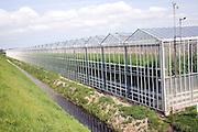 Intensive horticulture growing tomatoes in greenhouses, near Schipluiden, Netherlands