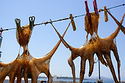 Octopus drying in the sun on a line. Photographed in Chania, Crete, Greece