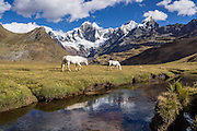 "Horses at Tuctucpampa campground stream below Nevado Jirishanca (left, ""Icy Beak of the Hummingbird"" 6094 m), Rondoy (right 5870 m). Day 1 of 9 days trekking around the Cordillera Huayhuash, Andes Mountains, Peru, South America."