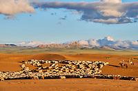 Mongolie, Province de Zavkhan, troupeaux de mouton dans des dunes de sable dans la steppe mongole // Mongolia, Zavkhan province, sheep herd in the deserted landscape of sand dunes in the steppe