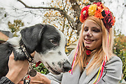Charlie a Border Collie, Springer and scary owner - A charity Halloween Dog Walk and Fancy Dress Show organised by All Dogs Matter at the Spaniards Inn, Hampstead. London 29 Oct 2017.