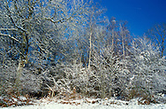 Deciduous Woodland in Winter