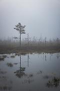 Cold and foggy morning in old wildfire part of raised bog Lielais Ķemeru tīrelis, Kemeri National Park (Ķemeru Nacionālais parks), Latvia Ⓒ Davis Ulands | davisulands.com