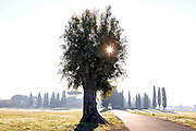 ROME - Sunrise seen through a tree on the Appian way near the catacombs of st Sebastian. Construction of the Appian way started in 312 BC and it was one of the earliest and strategically most important roads of Roman empire, connecting Rome to Brindisi. COPYRIGHT JURRIAAN BROBBEL