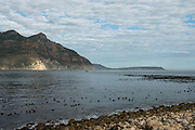 Kelp and shoreline<br /> Hout Bay harbor<br /> Western Cape<br /> SOUTH AFRICA
