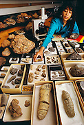 Karen Chin, the world's expert on fossilized dinosaur dung (coprolites), with her collection of suspected droppings while researching for her doctorate at the University of California, Santa Barbara.