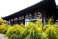 7. Gangoji 元興寺 was one of the great temples of the Heian Period in Nara.  Though it is not as grand as Kofukuji, Todaiji and Horyuji,  Gangoji Temple is comparatively more modest making it free of crowds who will be busy visiting the more famous spots in Nara. Nevertheless, it contains no less than three of Japan's National Treasures which include its main hall, modest as it may appear.  Gangoji lies among narrow streets of the Naramachi district of old Nara. The temple's design has architectural influences from mainland Asia and many of the priests who first served here were from Korea and China.  The grounds of Gangoji contain many ancient stone lanterns and grave markers, for which it the temple is famous.