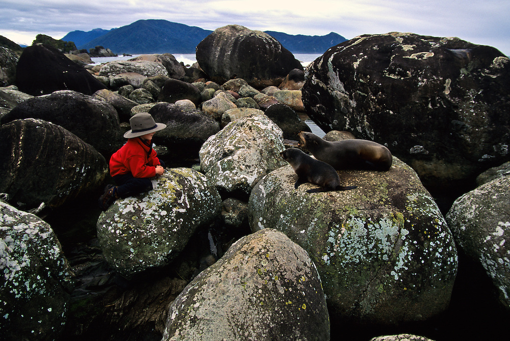 A boy watching sea lions on the shore.