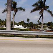 Vakantie Miami Amerika, palmbomen
