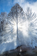 Steam and trees on Minerva Terraces in Yellowstone National Park at below zero