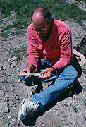 Paleontologist Jack Horner piecing together a dinosaur bone from Egg Mountain near Choteau, Montana.  Jack was much of the inspiration for Michael Crighton's Jurassic Park novel.<br /> Montana.