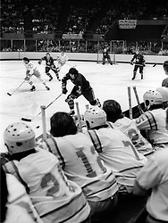 California Golden Seals bench during game against the<br />Bufalo Sabers game. (1975 photo/Ron Riesterer)