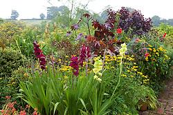 Hot borders in the brick garden at Glebe Cottage. Gladiolus in pots including Gladiolus 'Green Star' and 'Plum Tart'. Ricinus communis, Dahlia 'Bishop of Llandaff', Crocosmia and Rudbeckia fulgida var. deamii AGM
