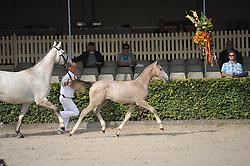 005 - Jakarta<br /> Hengstveulens springen<br /> KWPN Paardendagen - Ermelo 2014<br /> Hippo Foto - Leanjo de Koster