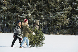 Young people carrying a christmas tree in snowy landscape, Bavaria, Germany
