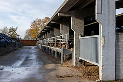 Draagmerries<br /> Stal de Muze - Sint Niklaas<br /> © Hippo Foto - Dirk Caremans<br /> 23/11/2020