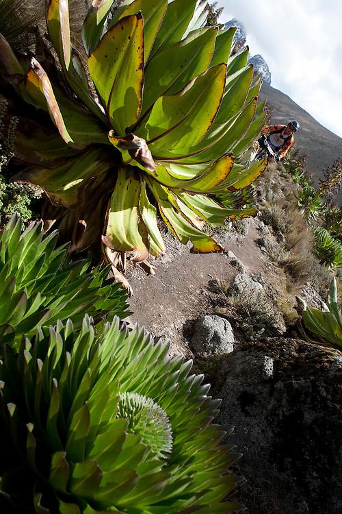 Location: Mont Kenya (Kenya) Urge Kenya 09/ The ultimate Mountain Bike gravity adventure at Mont-Kenya Rider: Alex Balaud