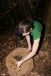 Sarah Hollinshead Releasing Mountain Brushtail Possum