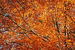 THEMENBILD - Herbststimmung in Knittelfeld, Steiermark, am 03/11/2011. EXPA Pictures © 2011, PhotoCredit: EXPA/ S. Zangrando