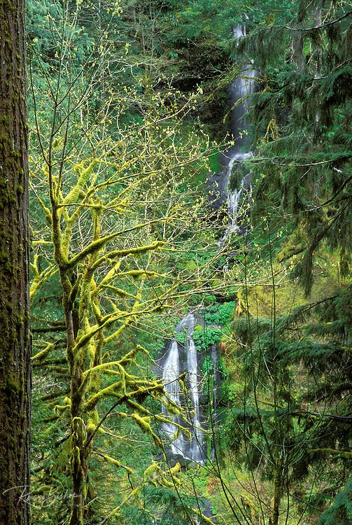 Cascade along Eagle Creek, Mount Hood National Forest, Columbia River Gorge National Scenic Area, Oregon USA