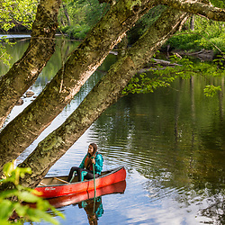 A woman paddling a canoe on the West Branch of the Pleasant River near Silver Lake in Piscataquis County, Maine. Near Greenville.