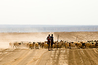 Maasai warriors herding goats, Amboseli National Park, Kenya