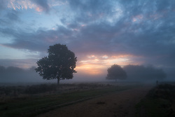 © Licensed to London News Pictures. 01/10/2016. London, UK. Thick mist hangs over Richmond Park at sunrise. Photo credit: Rob Pinney/LNP