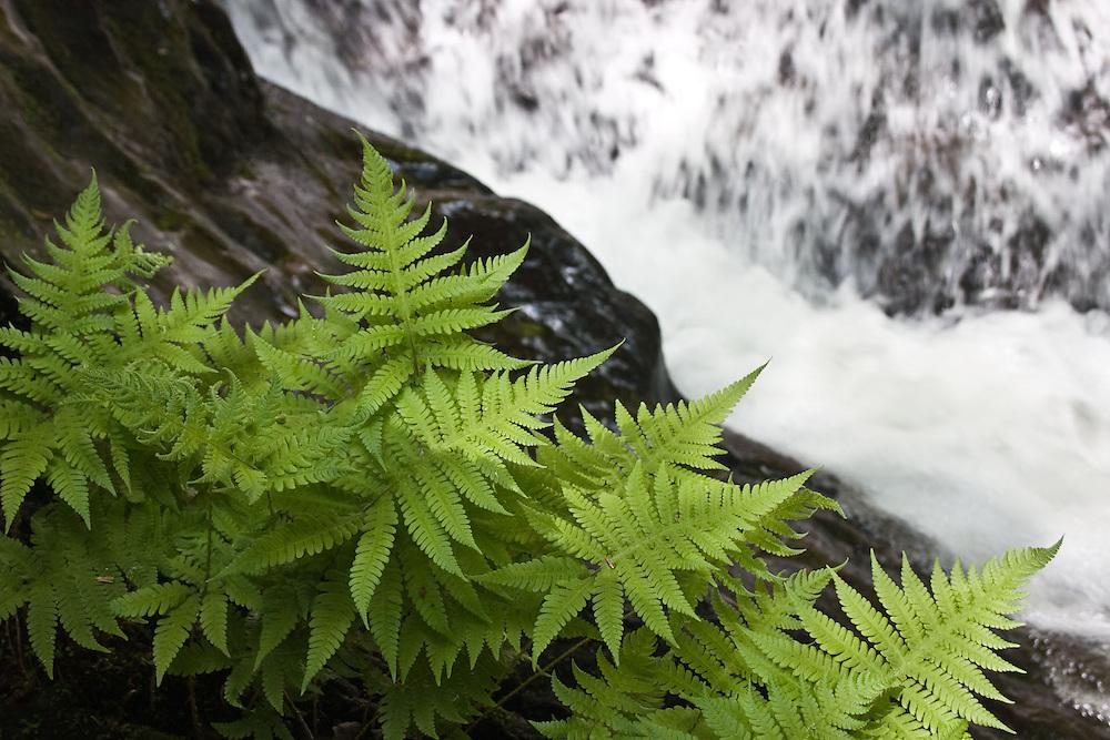 Fern Rock Water