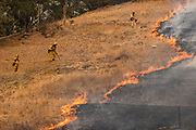 Fire Fighters watch as the edge of the fire creeps across a field towards a fire line they scrapped into the earth with hand tools as the Glass Fire continues to burn in Napa Valley, CA on September 29, 2020. The wildfire remains at 0% containment since it began three days ago and now threatens more than 10,000 structures.