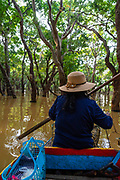 Tour guide gives tourists aboat ride through the flooded forest south of Kampong Phluk, Cambodia.