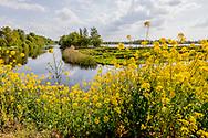 30-04-2020: Munnekeburen, Weststellingwerf - Prachtige begroeiing bij Ale Bakkers broggien aan de Kerkeweg