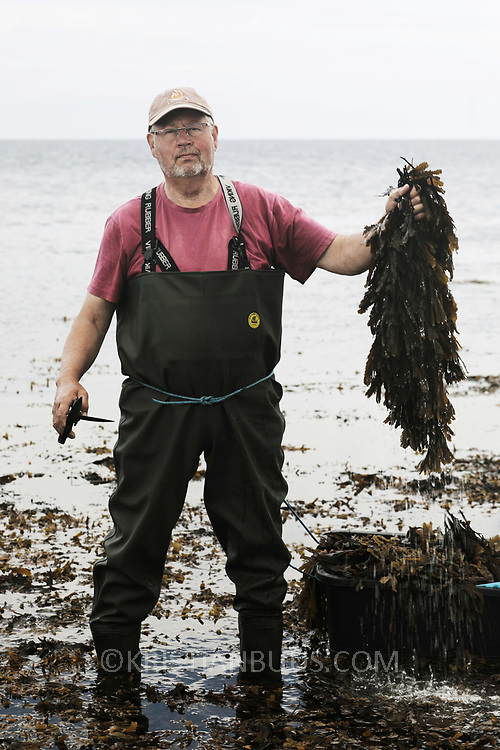 Bjarne Ottesen collects seaweed by the easternmost coast of Jutland, Denmark. Bjarne Ottesen is the co-founder of Nordisk Tang, which is a family run business. Ten years ago Bjarne was introduced to the idea that seaweed can be the answer to many current environmental issues by Michael Gorbachev. He and Gorbachev were both part of a Green Cross conference in South Africa where Bjarne first realised the huge potential to solve many of the world's food production issues by using seaweed.