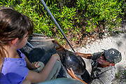 A swamp buggy tour guide shows a softshell turtle to a girl touring Big Cypress National Preserve in Florida.