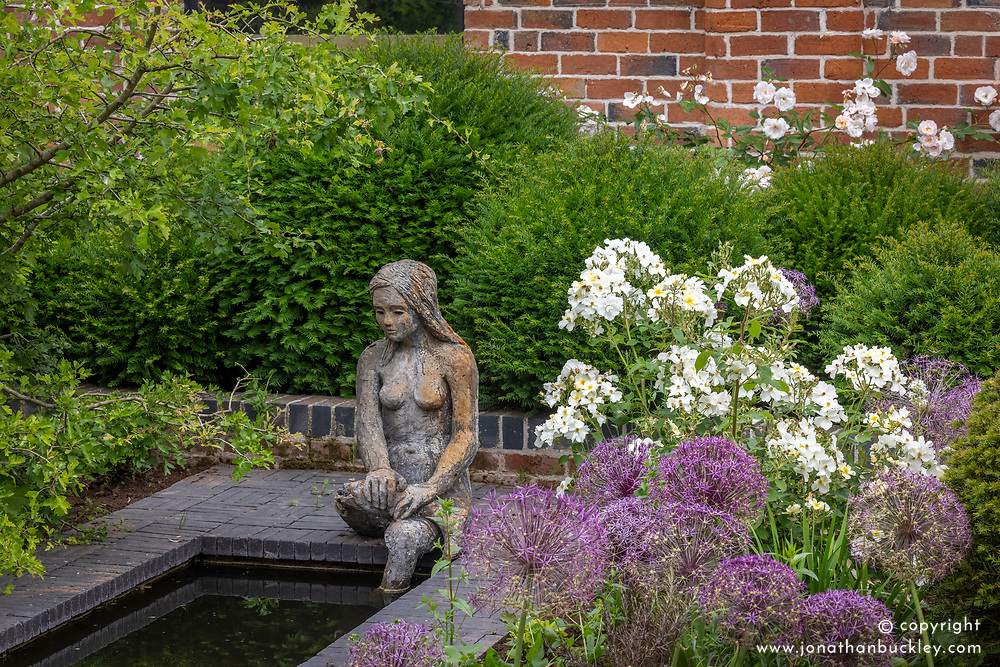Rosa 'Kew Gardens' growing with alliums by a pond